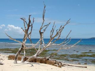 Mauritius e Seychelles per una luna di miele ineguagliabile: il paradiso non può più attendere