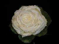 ' .  addslashes(Simone bertini floral designer) . '