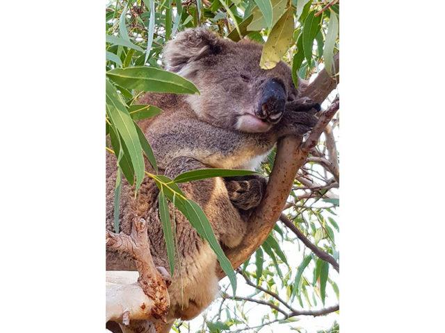 Cat Viaggi - Australia & Pacifico