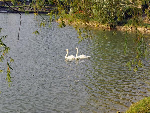 Ristorante Il Lago