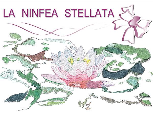 La Ninfea Stellata