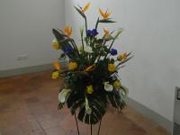 ' .  addslashes(Donna di Fiori) . '