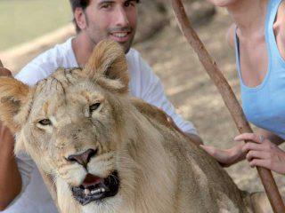 Un safari in Africa per la vostra luna di miele: tante idee e alcuni itinerari raccomandati