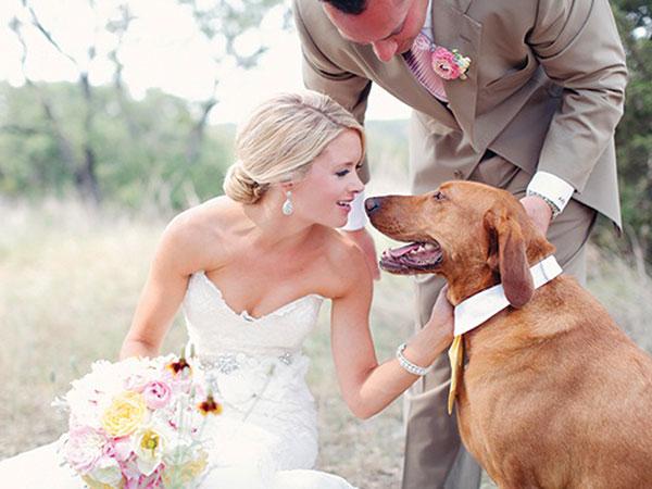 Itaca-dog for Wedding si occupa del vostro amico a quattro zampe ad un prezzo davvero speciale