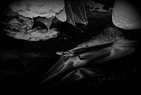 ' .  addslashes(Michela Repetti Foto) . '