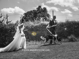 ' .  addslashes(Athena Servizio Dog Sitter per Matrimoni) . '