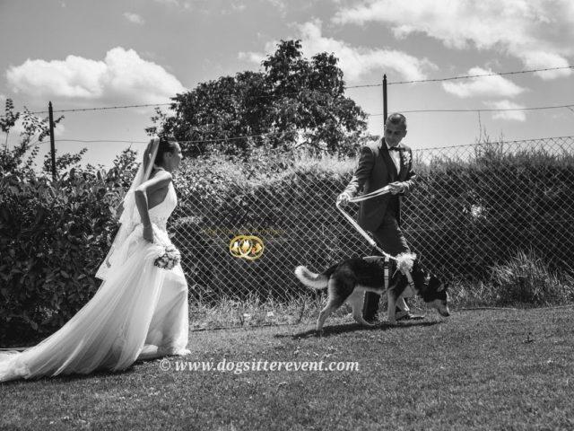 Athena Servizio Dog Sitter per Matrimoni