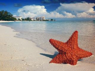 Bahamas, una luna di miele contornata da... uno spettacolo a cielo aperto