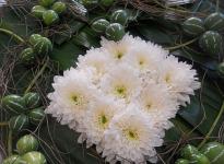 ' .  addslashes(Flor) . '