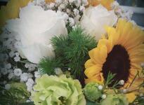 ' .  addslashes(Fioreria Anemone) . '