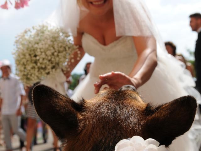 Athena Servizio Dog Sitter per Matrimoni sconta dell\'interessante 15% i suoi servizi per le nozze
