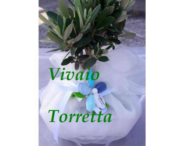 Vivaio Torretta