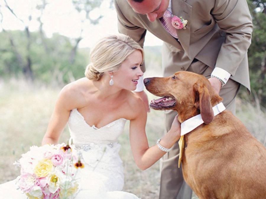 Il miglior amico dell'uomo e il giorno delle nozze: come comportarsi?